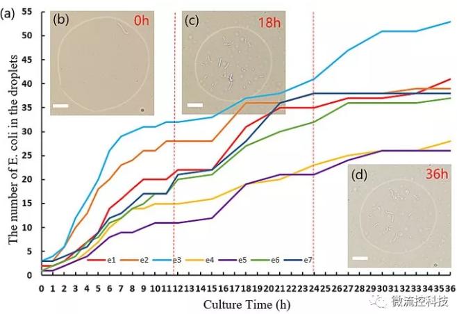 图2. 液滴中大肠杆菌的数目随时间变化的图像