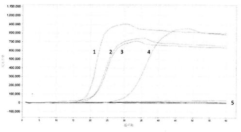 图1HPVl引物扩增曲线