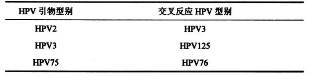 表2皮肤低危型别组内出现交叉反应的HPV型别