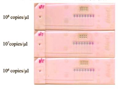 图8皮肤罕见型别组I-IPV型别灵敏性检测