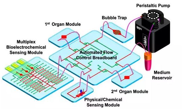 器官芯片应用