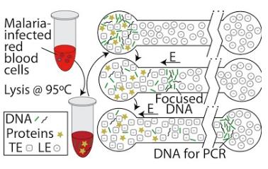 提取DNA