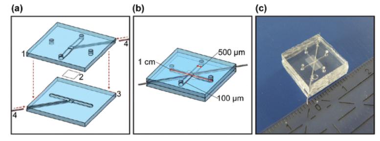 图3.芯片层(a)和组装芯片(b)的示意图,以及Griep等人开发的片上BBB的图片。(转载自Griep等人)