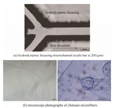 微通道和壳聚糖纤维的显微照片