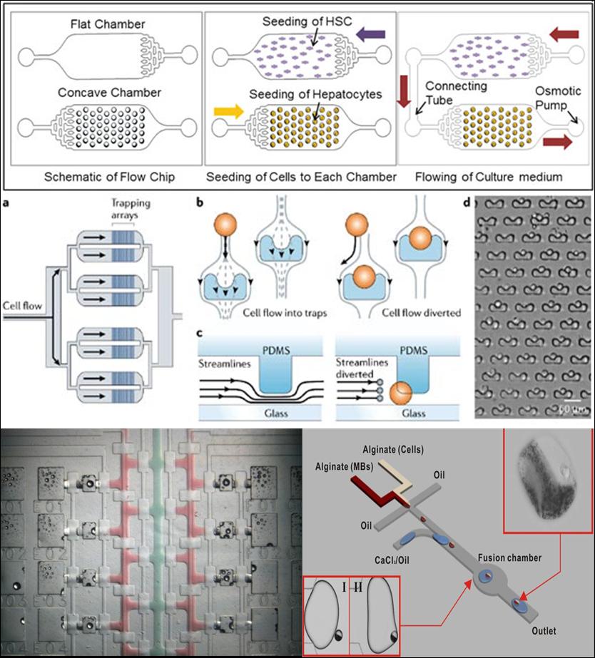 生物芯片 - 细胞分析芯片