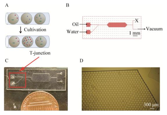 图1用于共培养的微流体装置