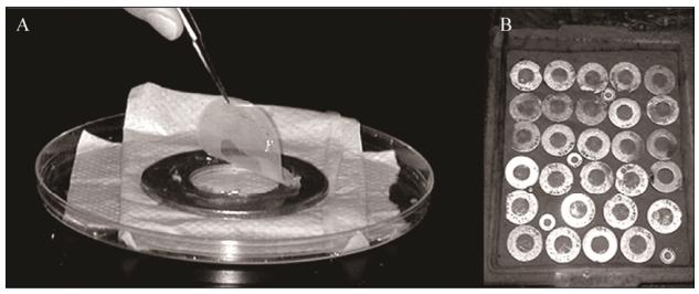 图2扩散生长盒原位培养环境微生物示意图