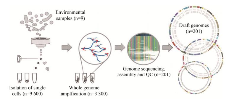 图4单细胞测序工作流程