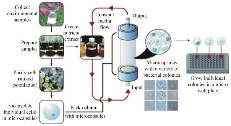 图7基于单细胞包埋在凝胶微滴板中的高通量培养方法流程图