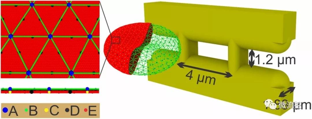 微流体系统帮助预测血管易堵塞程度