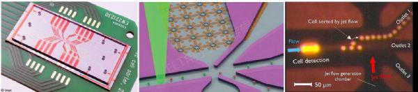 芯片上的微流体通道内进行细胞分选的图片