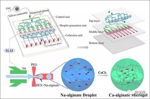 微流控技术制备双水相生物微载体