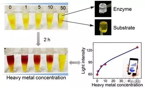可视化重金属离子总毒性评估