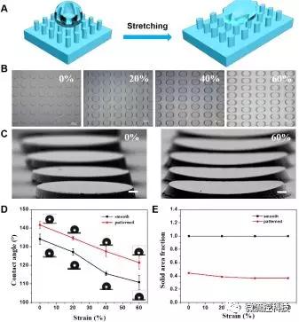 图1. (A-C)形状记忆微柱阵列结构在拉伸至20%,40%及60%后的形貌连续可控变化,及在外力撤销后形变维持;(D,E)形状记忆微柱阵列可控拉伸形变后表面浸润特性改变及微结构形貌改变