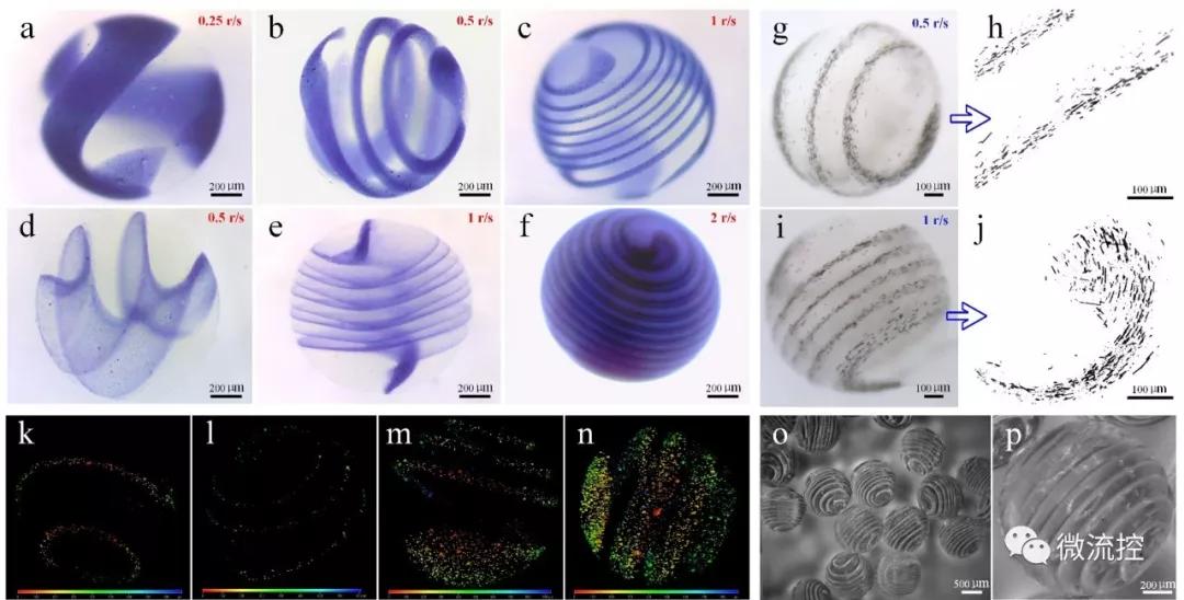 图 1. 气流辅助异质螺旋微球类器官的成型工艺