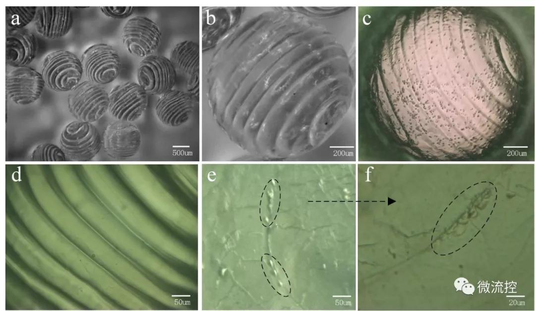 图4.基于该方法制造的螺旋异质凝胶微球