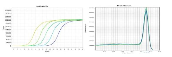 检测反应体系中荧光的实时变化