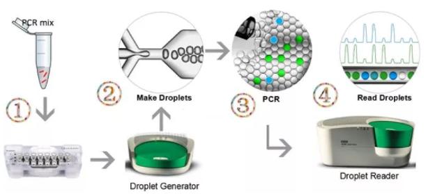 微滴式数字PCR
