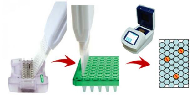 PCR扩增