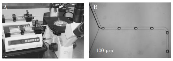 图2(A)实验系统装置;(B)液滴稳定生成