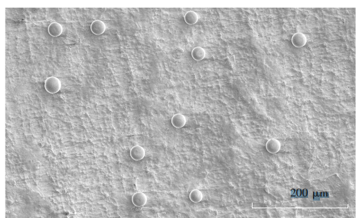 图6!80℃冷冻交联3次后的PVA凝胶微球的电镜图