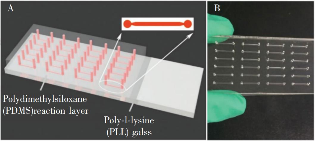 冰毒检测微流控芯片:(A)芯片结构示意图;(B)芯片实物图
