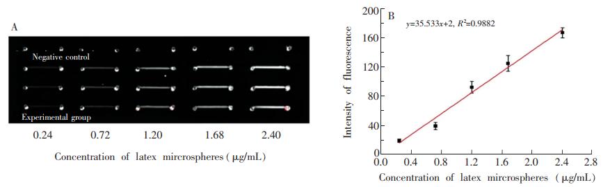 """图4(A)PDMS-PLL杂合芯片检测梯度连接在乳胶微球上的MET-Ab的荧光图;(B)对应图(A)的""""乳胶微球-灰度值冶曲线"""