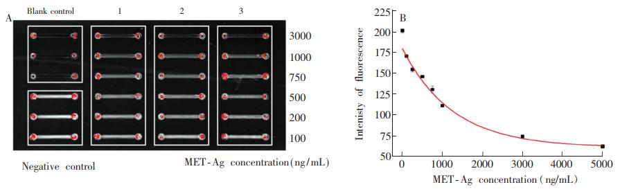 """图5(A)芯片对冰毒标准品的梯度检测荧光图;(B)对应图(A)的""""冰毒标准品浓度-灰度值冶曲线"""