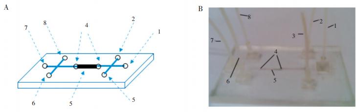 磁珠芯片图:(A)为示意图;(B)为实物照片1.磁珠溶液进口;2.样品与淋洗液进口;3.洗提液进口;4.双堰;5.磁珠固定区域;6.样品与淋洗液出口;7.磁珠出口;8.洗提液出口