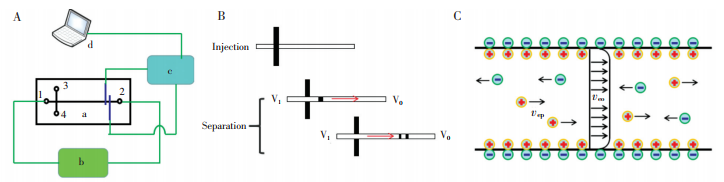 图1微芯片电泳检测原理。(A)微芯片电泳系统框图,a-微芯片,b-分离高压,c-信号发生与采集模块,d-信号后处理模块;(B)传统微芯片电泳进样与分离示意图;(C)电渗流及电泳引起的离子运动示意图,veo-电渗流引起的运动,vep-电泳引起的运动