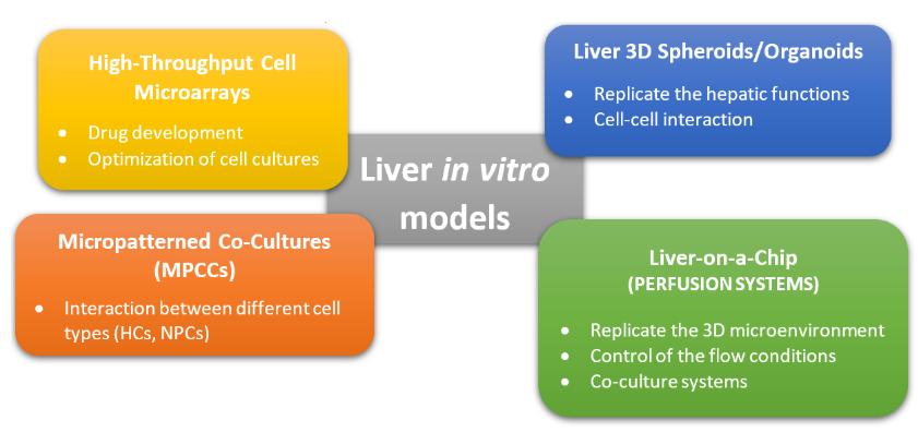 图2.肝脏体外模型的常用方法的图形表示。这些方法可分为非灌注系统(MPCC,3D球体)和灌注系统(肝脏上芯片),而高通量细胞微阵列通常用于药物筛选和开发[2] [10]。