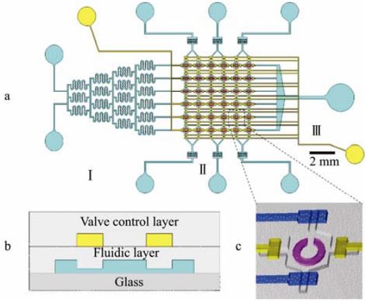图 1 微流控细胞阵列芯片设计示意图
