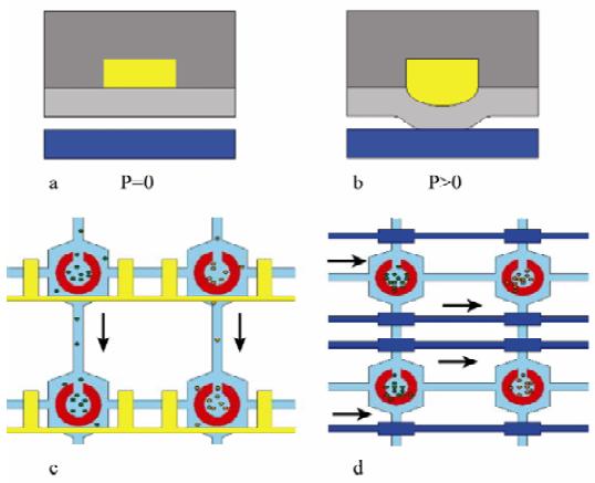 图 3 微阀的结构图和工作原理图