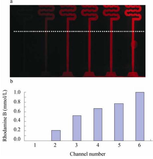 图 5 芯片的罗丹明 B 药物浓度梯度的表征