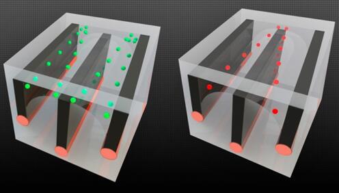 图片显示了麻省理工的研究人员如何在长纤维中整合导线和微流控通道,并展示了细胞分选的能力——将活细胞从死细胞中分离开来,因为这两种细胞对电场的反应不同。以绿色显示的活细胞被拉向通道的外边缘,而死细胞(以红色显示)则被拉到中心,允许它们被送入单独的通道