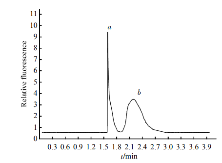 Fig.2EletropherogramoftheseparationofstandardHDLTheinjectionconcentrationofHDLwas80滋mol/L.Separationconditions:Samplebuffersolutioncontained0.2mmol/LSDS,40mmol/LTricine,50mmol/LMEGatpH8.5.Separationbuffersolutioncontained0.01mmol/LSDS,40mmol/LTricine,50mmol/LMEGatpH8.5,withEat450V/cm.