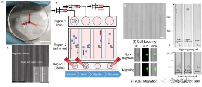图 1 SCM-chip的结构表征、操作流程和功能表征