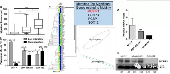 图 2 低迁移能力的乳腺癌细胞呈现MCPIP1高表达
