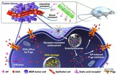 利用微流控技术有效提高肿瘤化疗效果