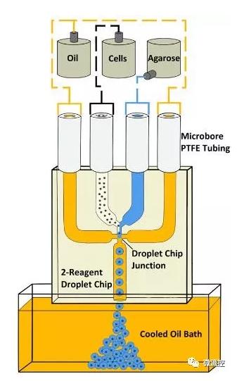 使用具有双试剂、四通道玻璃连接芯片的微流控液滴系统生成琼脂糖微珠