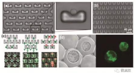图1 基于流体力学的微流控芯片上的单细胞操控