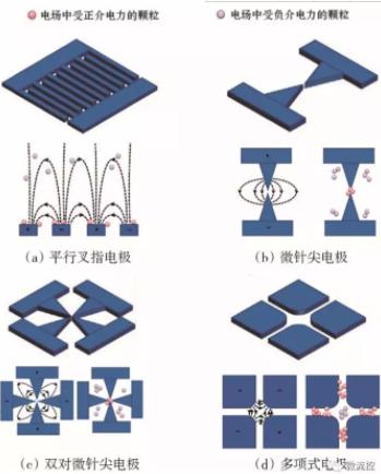 图5 不同电极结构产生的非均匀电场中受正介电力和负介电力的粒子捕获示意