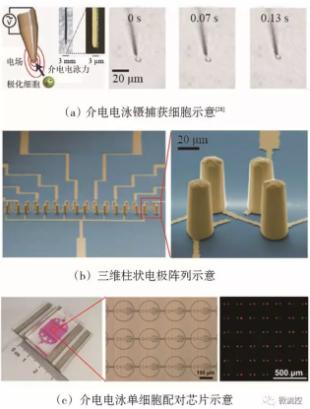 图6 基于介电电泳技术的微流控芯片上的单细胞捕获