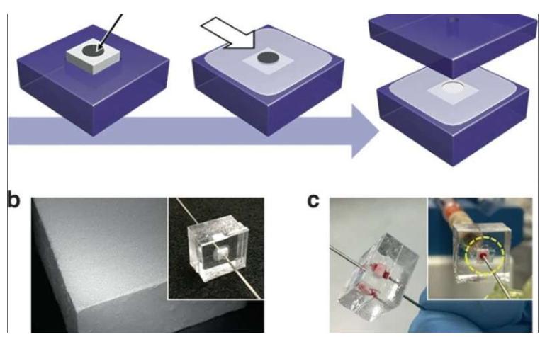 使用微流控整体装置从血液中分离完整细菌