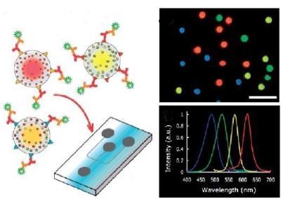 图5.用于免疫传感应用的QDs的示意荧光图像和发射光谱