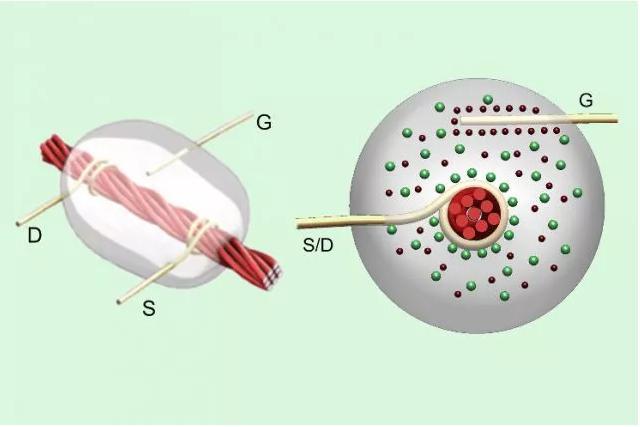 线基晶体管:碳纳米管涂覆的亚麻线在源极(S)和漏极(D)金属线之间携带电流,以响应栅极(G)检测到的电压。