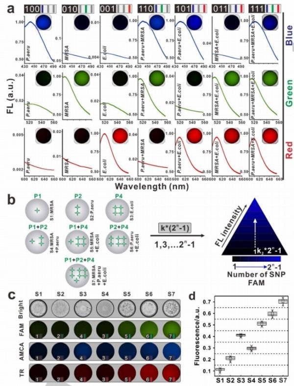 使用基于SDwalker-Drop的颜色或强度编码条形码对细菌进行多重分析