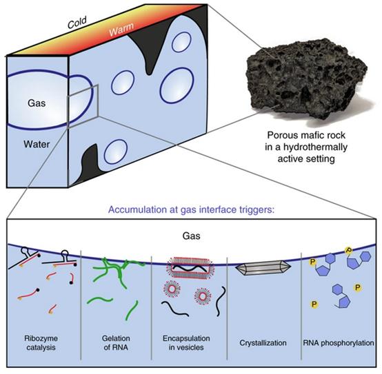 研究人员利用3D打印构建了模拟火山岩的微流控器件,用于观察重要的生命分子在液-气界面的动力学行为