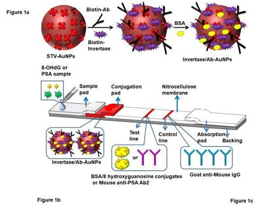 """""""微流控+智能手机血糖仪"""" 打造非血糖分子检测平台,量化评估DNA过氧化损伤"""