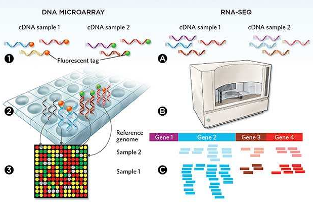 微流控自动化技术革新RNA-Seq文库构建流程 --- FLUIDIGM发布更高效、更节约成本的Advanta RNA-Seq NGS 文库构建解决方案
